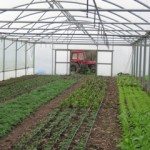 Photo of the Trill Farm poly tunnel