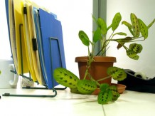 Photo of plants in an office