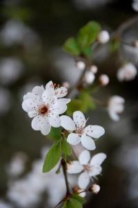 Photo of spring blossom