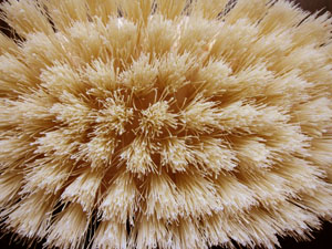 Close up photo of a natural brush