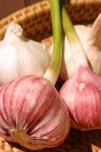 Photo of dried and fresh garlic