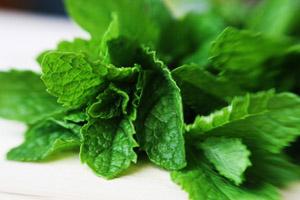 Photo of fresh mint