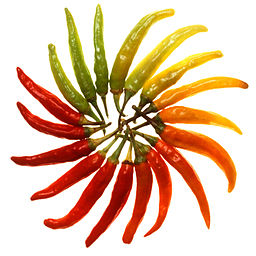 Photo of a sunburst made from a variety of coloured chillies