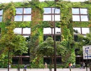 Photo of a living 'green wall' in a city