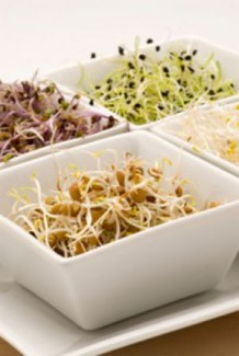 Photo of sprouted seeds in white bowls