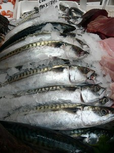 Photo of fresh UK mackerel