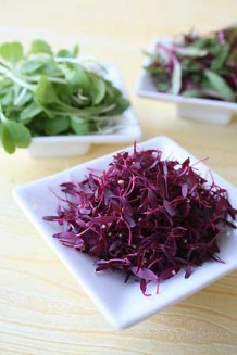Photo of bowls of microgreens