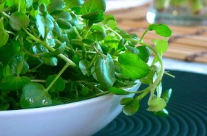 Photo of watercress in a bowl