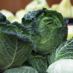 Photo of cabbages