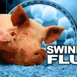 Photo illustrating swine flu