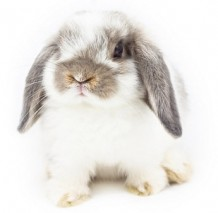 Inconsistencies in the new EU animal testing ban mean we still need to  look for the 'cruelty free' label