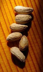 Photo of neem tree seeds