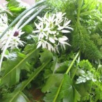 Photo of spring herbs