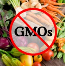 NO GMO photo