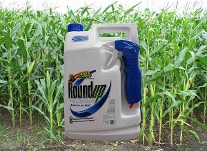 Photo of Round Up herbicide