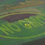 Photo of a no GMO message cut into a corn field