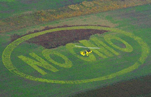 Photo of a no GMO message cut into a corn field