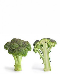 Photo of broccoli on a white background