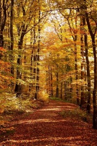 Photo of an autumnal forest