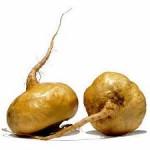 Photo of maca root