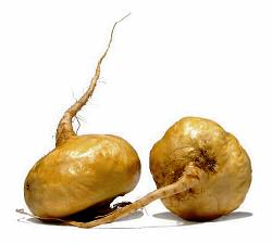 Photo of maca root