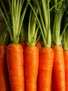 Close up photo of carrots