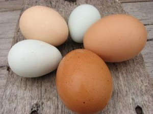 Photo of diferent types of hen's eggs