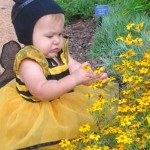 Photo of an infant dressed as a bee