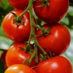 Photo of tomatoes on the vine