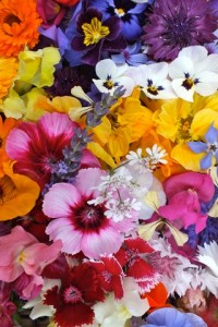 Photo of a selection of edible flowers