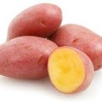 Photo of a genetically modified pink potato