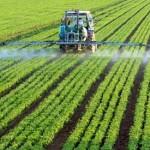 Photo of glyphosate being sprayed on a field