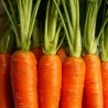 Close-up photo of carrots