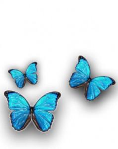 Illustration of blue butterflies