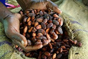photo of two hands holding cocoa beans