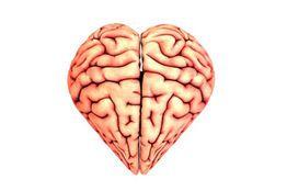 Photo of a brain shaped like a heart