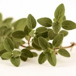 Photo of oregano on a white background