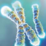 Enhanced photo of telomeres