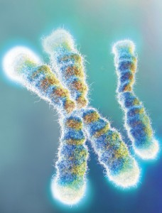 Enhanced photo of telomeres