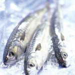 photo of oil-rich fish