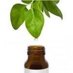 Illustration of herbal medicine