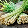 photo of lemon grass