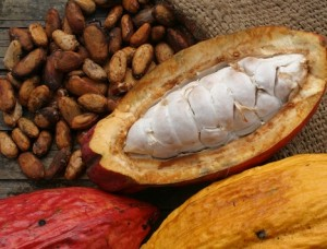 photo of raw cacao