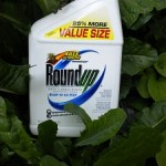 Photo of a container of Roundup