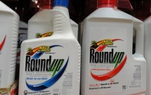 Photo of containers of Roundup