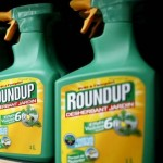 EU officials have extended the license for glyphosate while waiting for more data on health effects.